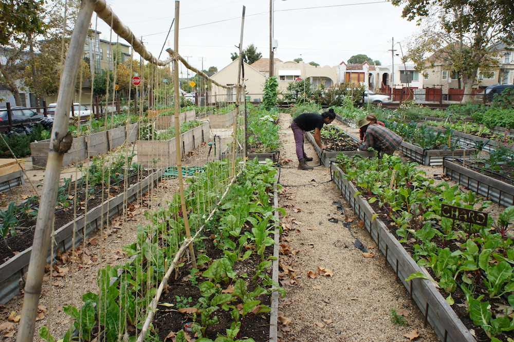 Potential new zoning regulations will make it easier to start an urban farm in Oakland. Photo: Angela Johnston