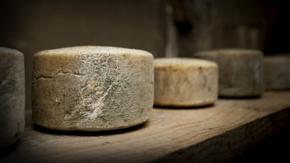 Many artisan cheese producers never pasteurize their milk – it's raw. The milk's natural microbial community is still in there. This microbial festival gives cheese variety and intrigues scientists. Photo: iStockphoto
