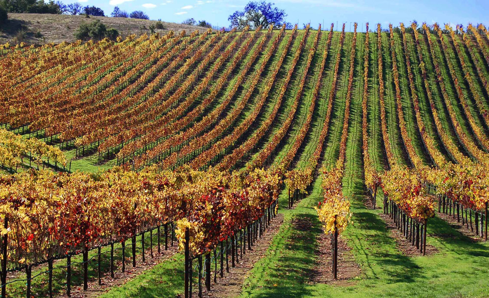The cost of buying a winery with vineyard acreage can top $25 million in prime Napa and Sonoma locations, experts say. Photo: Susan Hathaway