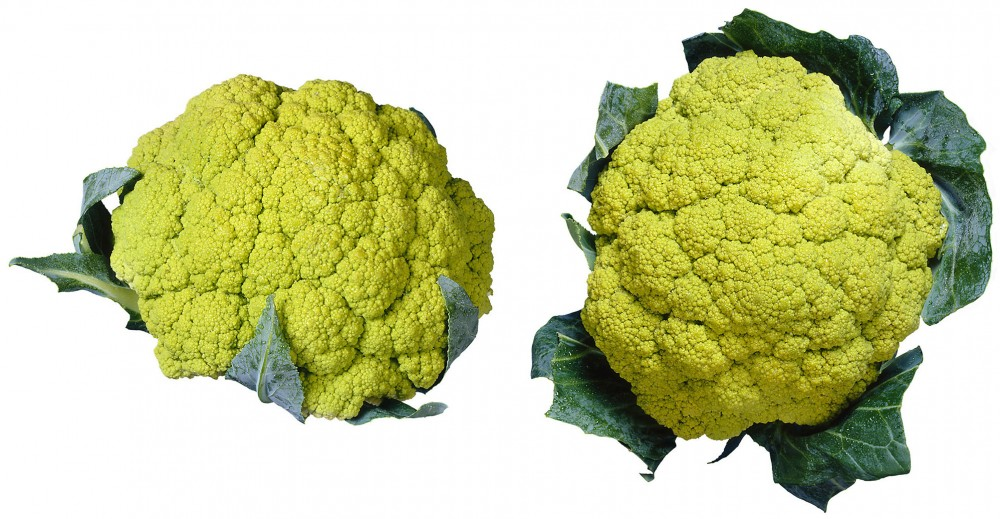 Broccoflower was originally grown in Holland and hit the U.S. market in 1989. It's remained a relatively specialty item since then, but culinary experts say it may soon become more widely available. Photo: Brand X Pictures/Getty Images