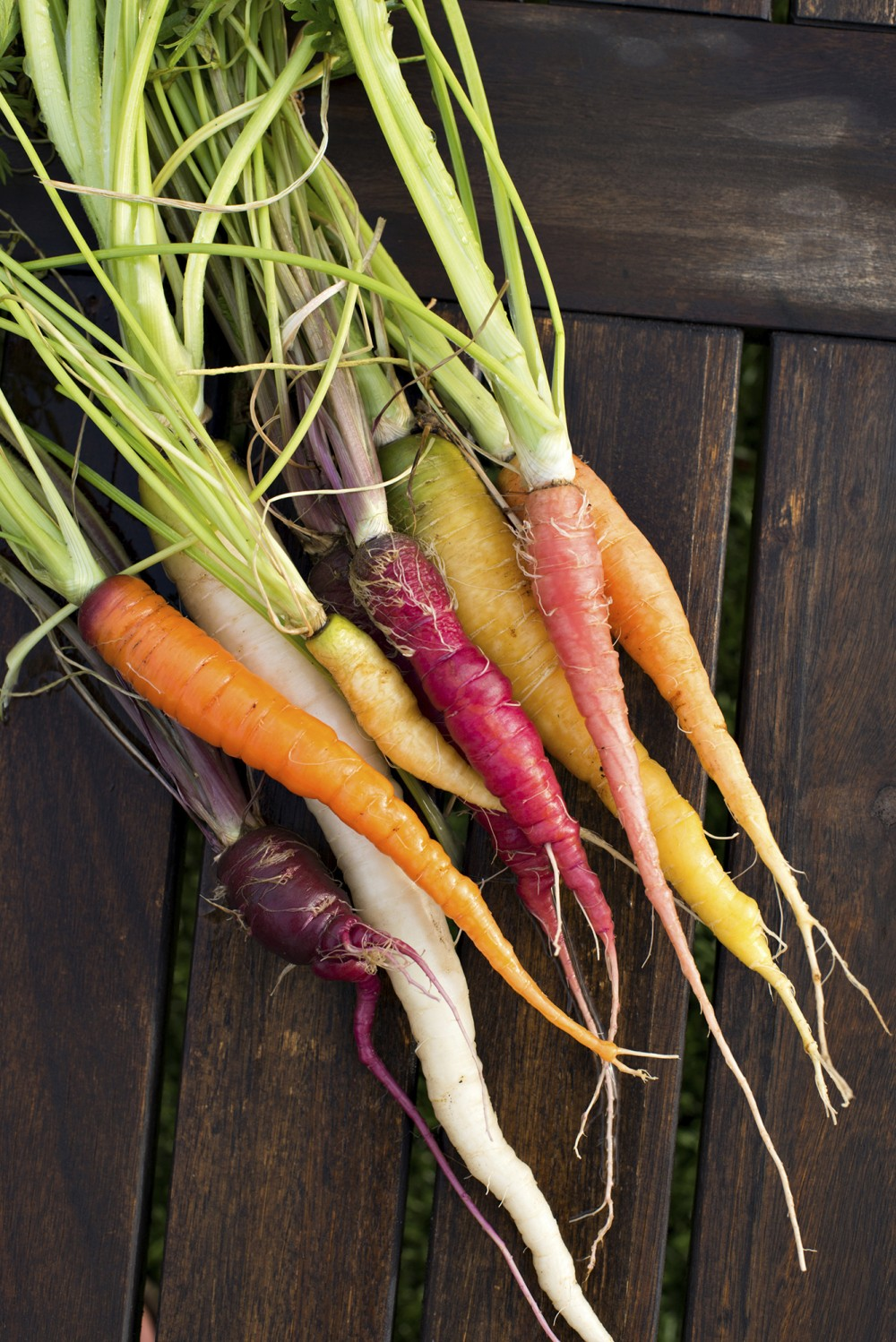 Rainbow carrots were originally developed by the USDA as an experiment to get more nutrients in food. Photo: Mark Skalny/Getty Images/iStockphoto