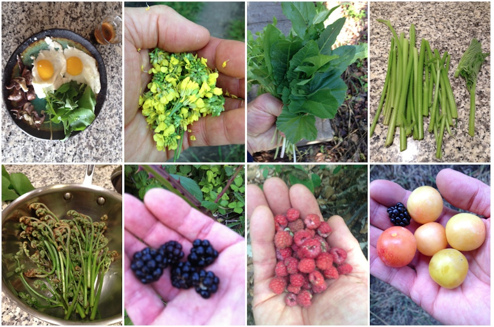 Snacking In-Between Sidewalks: Mapping Abundance of Wild Edibles in the Bay Area's Food Deserts
