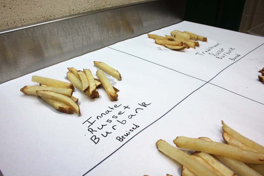 Michigan State's researchers cooked up two batches of fries to compare bruising in traditional, non-GMO potatoes (left) and GMO potatoes (right). Photo: Dan Charles/NPR