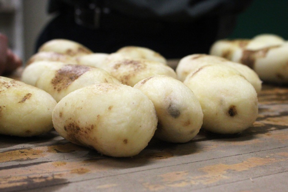 After a turn in the tumbling machine, these conventional russet Burbank potatoes are starting to show signs of bruising. New GMO potatoes called Innate russet Burbanks have been bred not to bruise as easily as these. Photo: Dan Charles/NPR