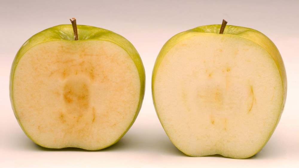 Arctic Granny (right), a GMO variety created by Okanagan Specialty Fruits, got the gren light from federal regulators Friday. The apple doesn't turn brown like a conventional Granny Smith apple (left). Photo: Okanagan Specialty Fruits