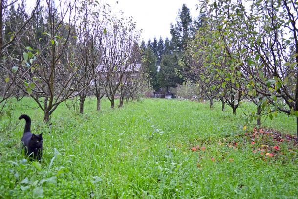 Orchard photo courtesy of Devoto Orchards & Gardens