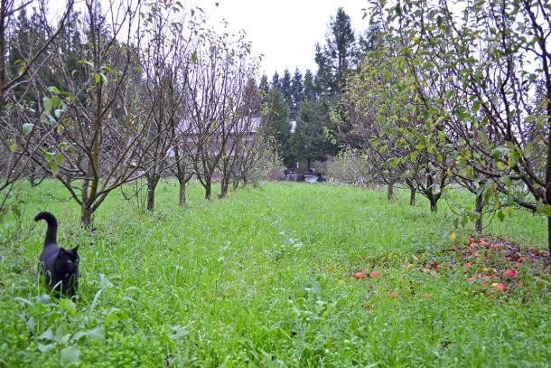 Do Warmer Winters Mean Less Fruit?