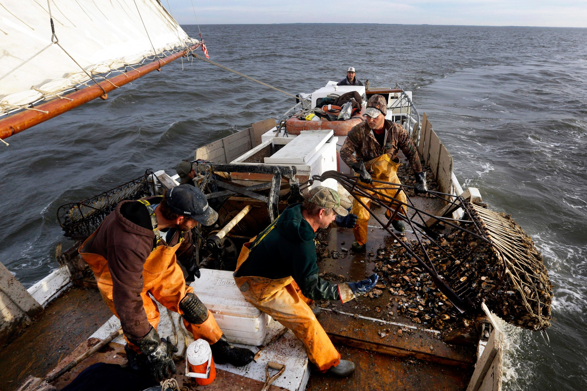 """Crew members pull an oyster dredge in Tangier Sound of the Chesapeake Bay near Deal Island, Md., in 2013. A study found that the Chesapeake Bay shellfishery is a """"hot zone"""" for ocean acidification. Photo: Patrick Semansky/AP"""