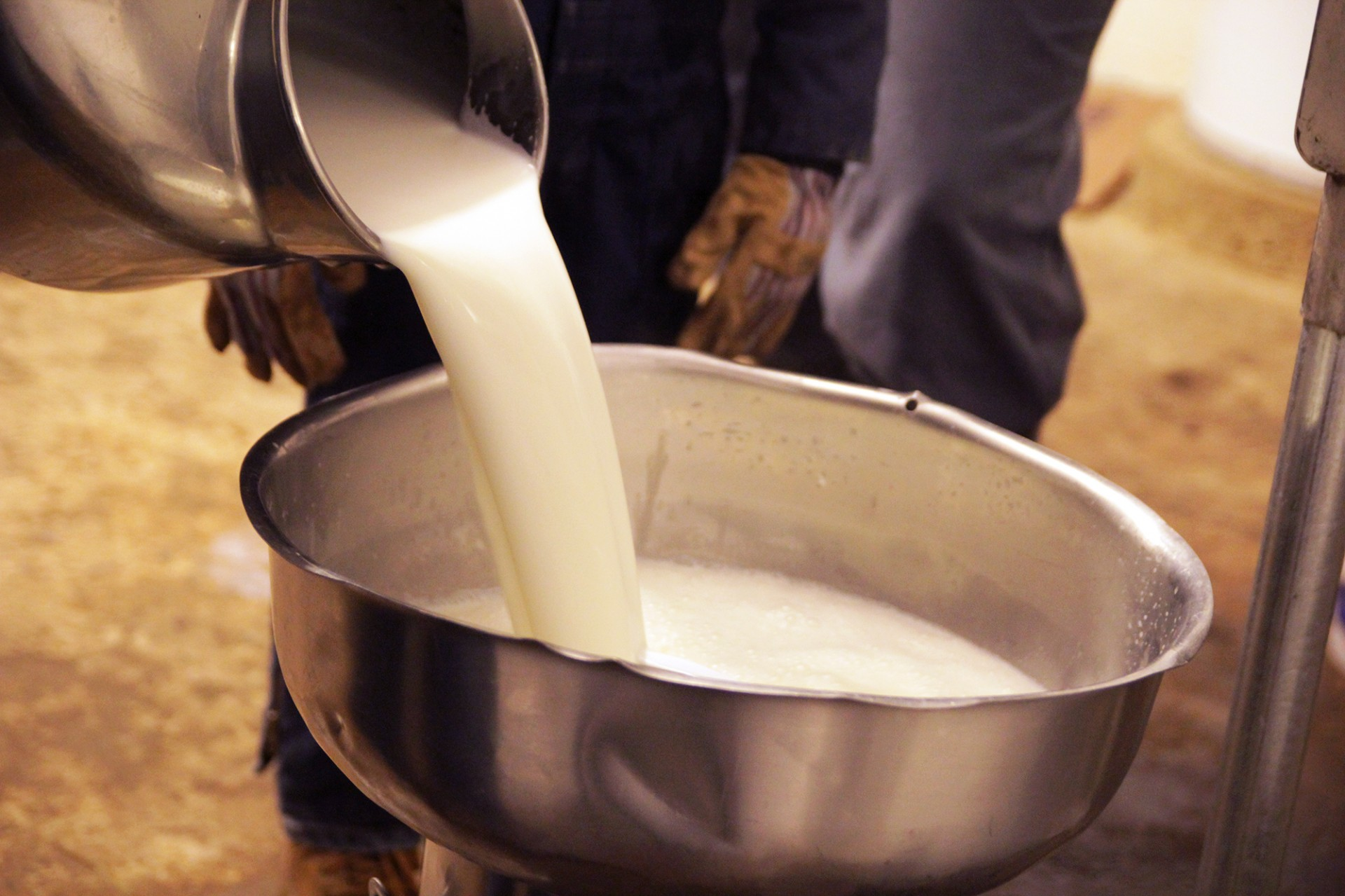 The U.S. Centers for Disease Control and Prevention cautions that unpasteurized milk can cause serious illness, because it's a fertile breeding ground for harmful germs like salmonella and E. coli. But such warnings haven't deterred raw milk enthusiasts. Photo: Abby Wendle/Harvest Public Media