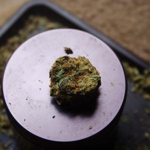 Marijuana. Photo courtesy of Feastly