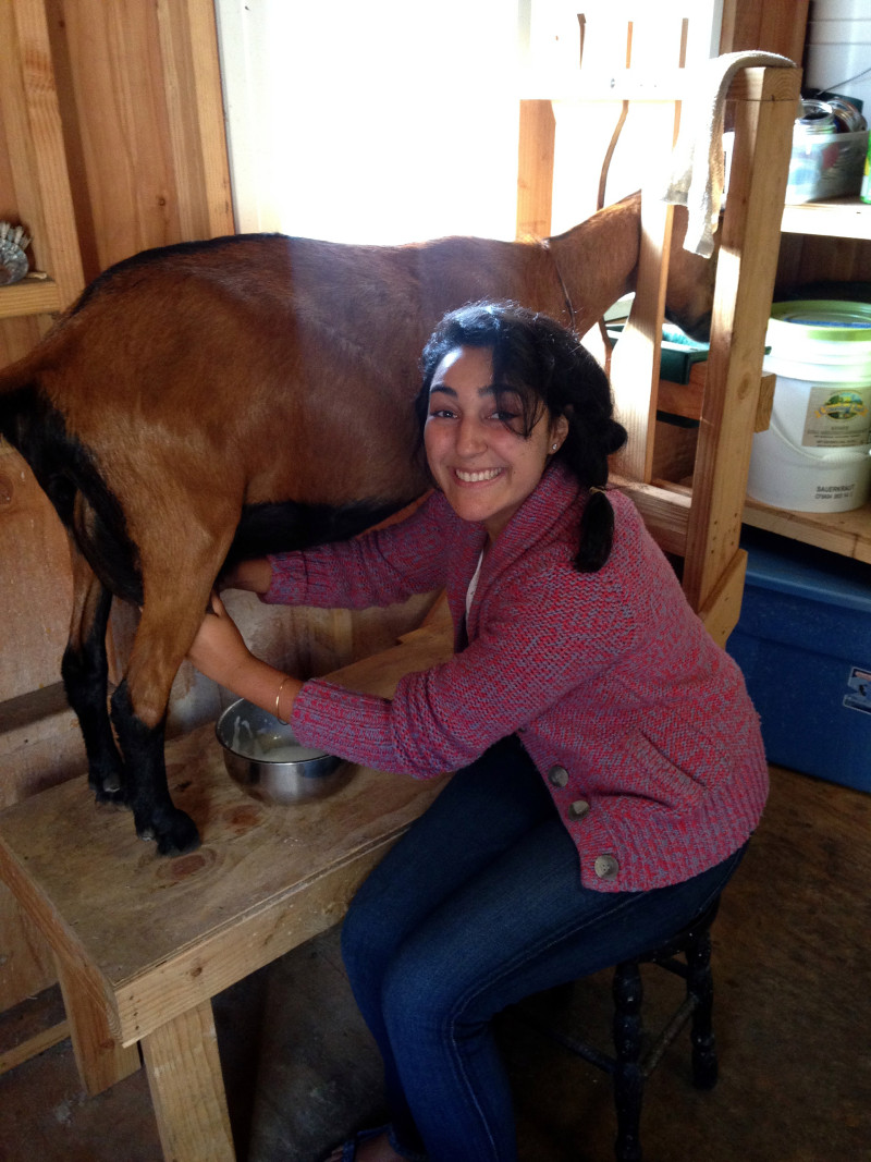 Asal: While on a farming fellowship, Asal Esanipour learned how to milk goats. Photo: courtesy of Asal Ehsanipour
