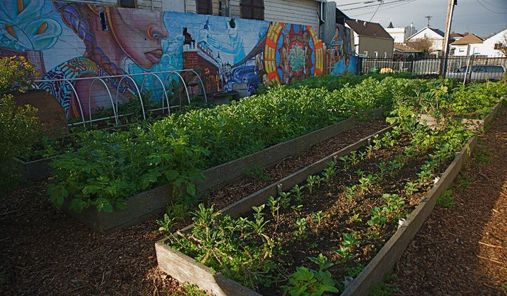 People's Grocery's vegetable garden at low-income apartment building Hotel California. Photo: People's Grocery