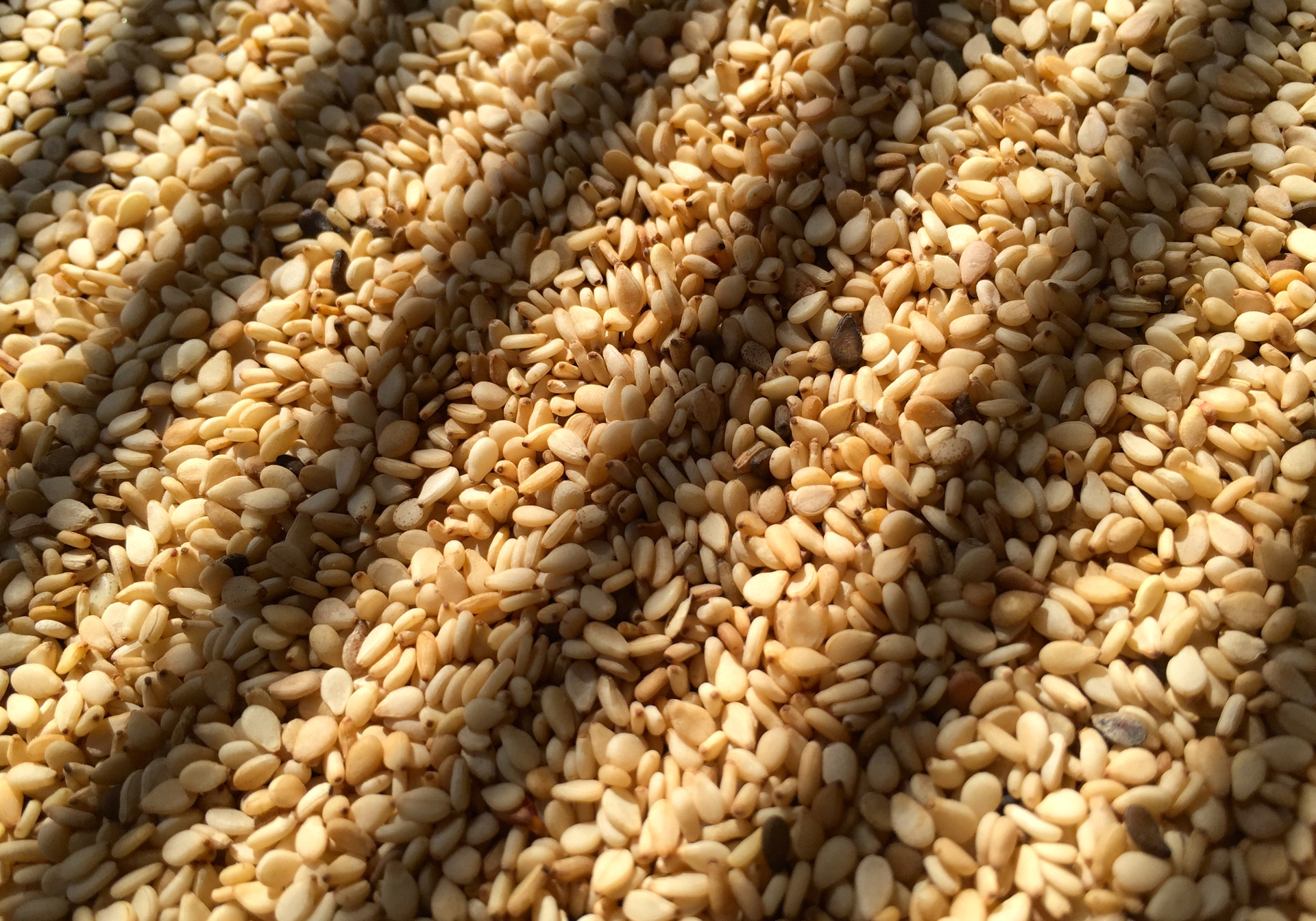 Sesame Seeds. Photo: Lisa Landers