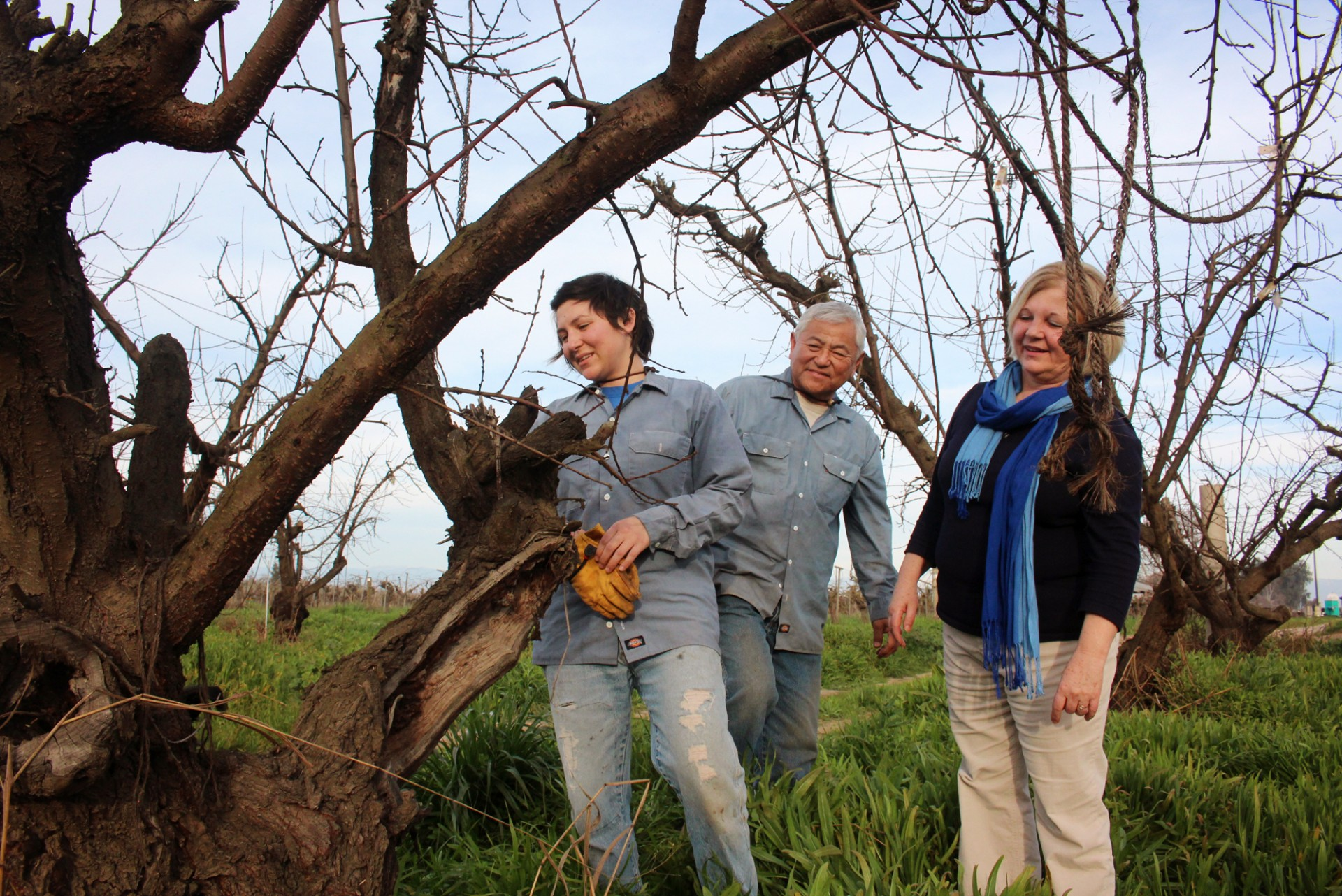 Nikiko Masumoto, her father, Mas, and her mother, Marcy, inspect one of the old Suncrest peach trees that Mas almost destroyed in 1987. Photo: Dan Charles/NPR