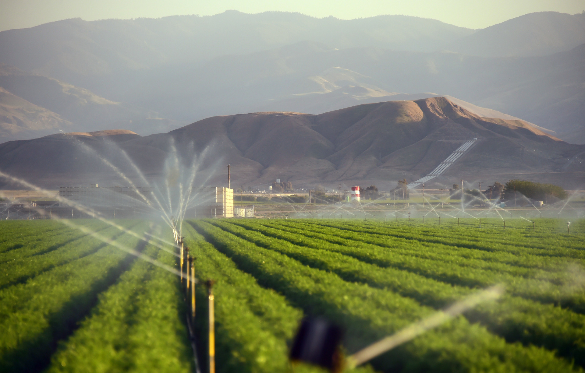 Fields of carrots are watered March 29, 2015, in Kern County, Calif. Subsidized water flowing in federal and state canals down from the wet north to the arid south helped turn the dry, flat plain of the San Joaquin Valley into one of the world's most important food-growing regions.