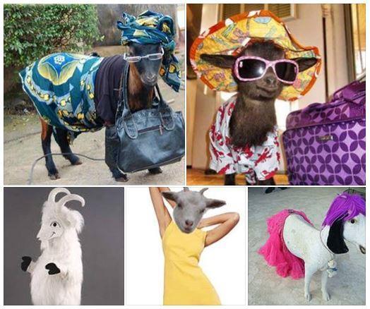 goat_fashion