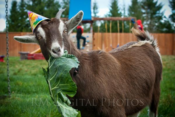 goat_party