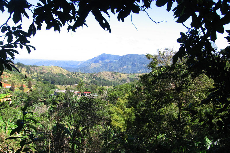 The view from Elena Biamon's coffee farm, Finca Gripiñas. Coffee has been grown on these hillsides for more than 150 years. Biamon and her husband, Miguel Sastre, bought the farm several years ago and now grow organic specialty coffee.