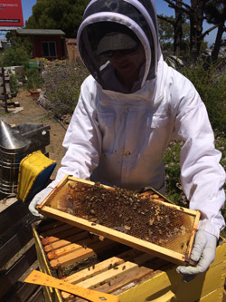 Urban Agriculture Program- beekeeping.
