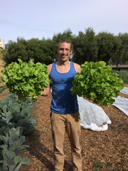 Urban Agriculture Program - growing lettuce