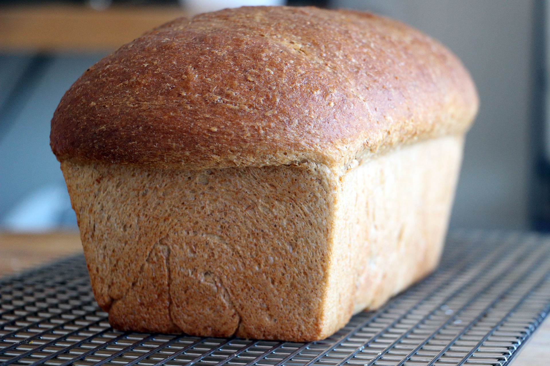 Homemade Whole-Wheat Honey Sandwich Bread