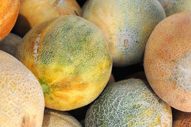 Ambrosia melons