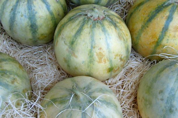 Charentais melons
