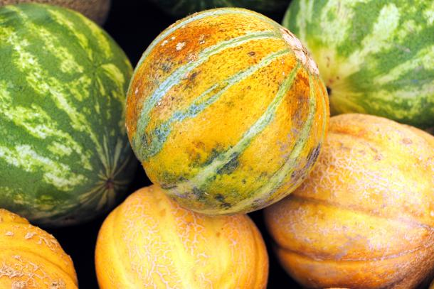 Melons 101: How To Pick Ripe Melons and 12 Varieties You Need to Try