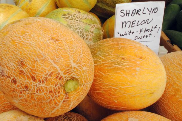 Sharlyn melons