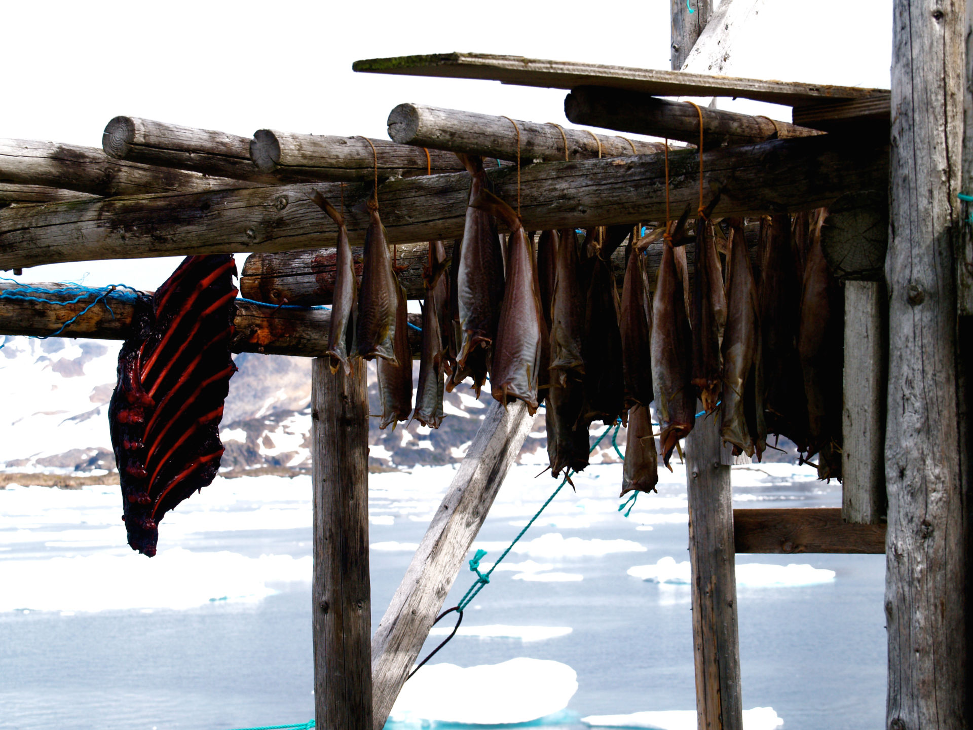 Seal meat and fish air dry in Greenland.