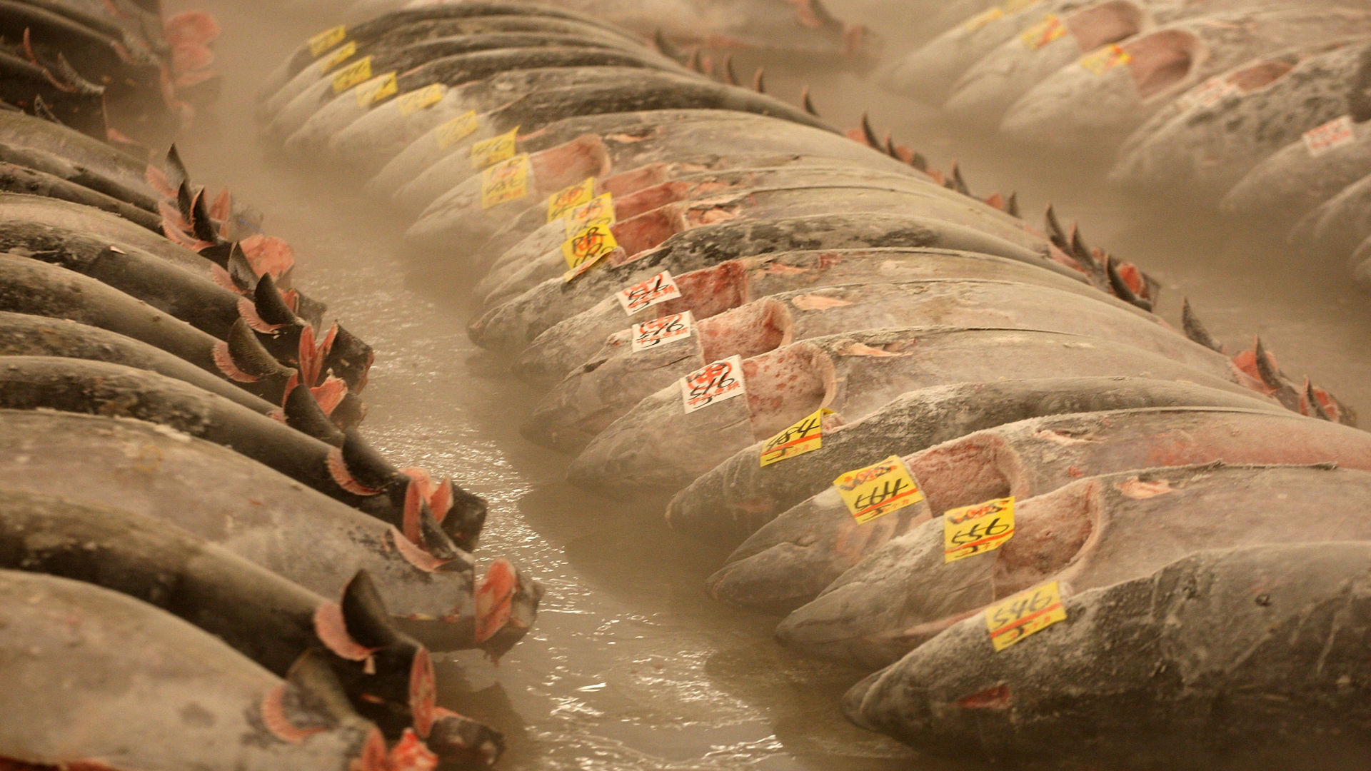 Frozen tuna lies on the ground at the Tsukiji fish market in Tokyo. The FDA recommends freezing raw fish before serving it in sushi as a way to keep it free of parasites. But as a recent outbreak of Salmonella in the U.S. highlights, freezing doesn't guarantee that raw sushi fish is pathogen-free.