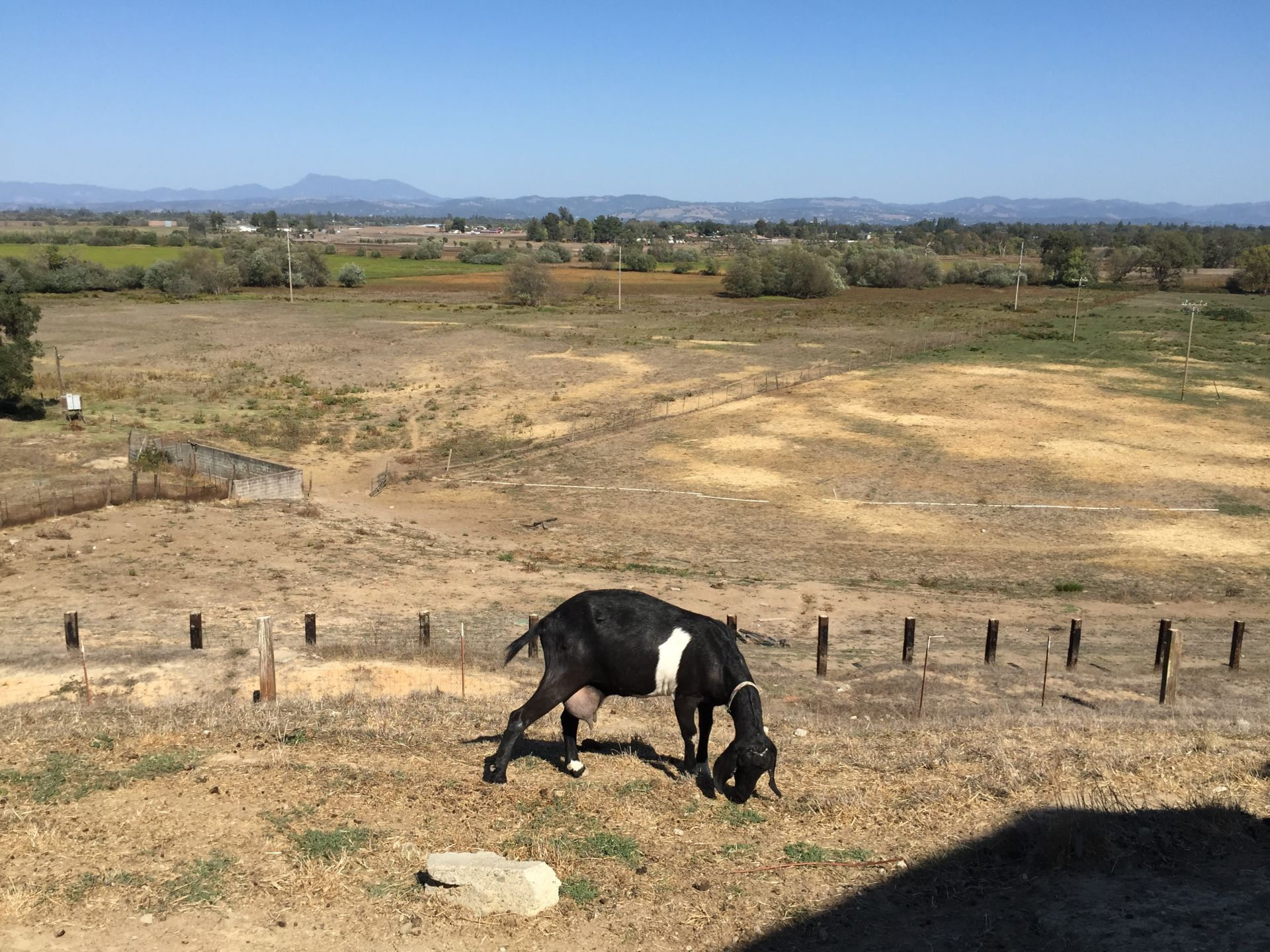 Not only does the creamery offer this view, but there are plenty of goats to play with.