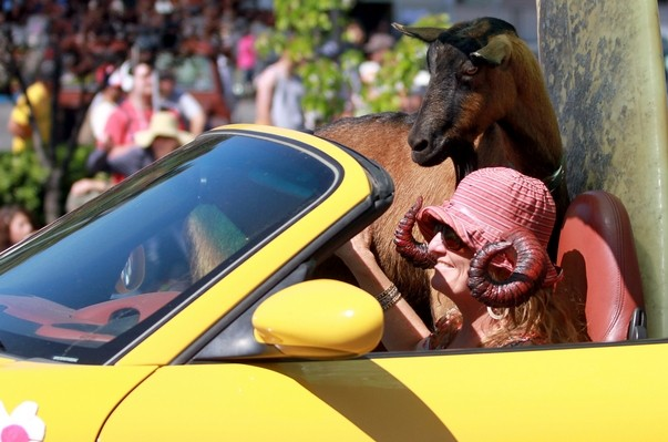 "Lisa Gottreich rides with ""Rifka"" the goat at the Apple Blossom Parade."