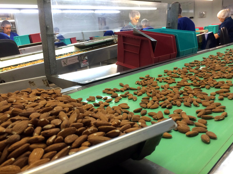 In 2015 more than 1.8 billion pounds of almonds were processed in California.