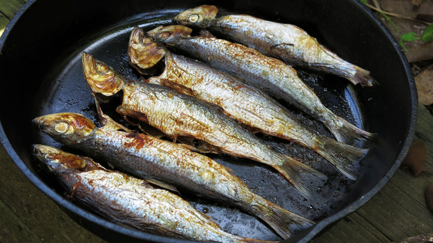 Herring Headache The Big Obstacles To Eating Small Fish