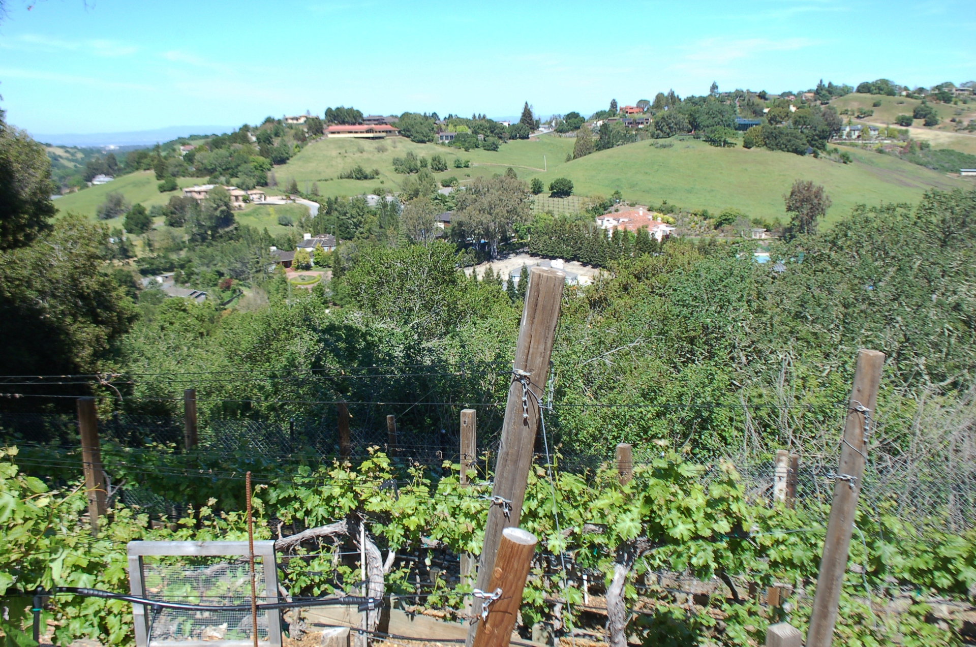 Scott Bryan's 300 vines and five varietals in Los Altos Hills overlooks some neighboring wine estates in this town where vineyards are booming.
