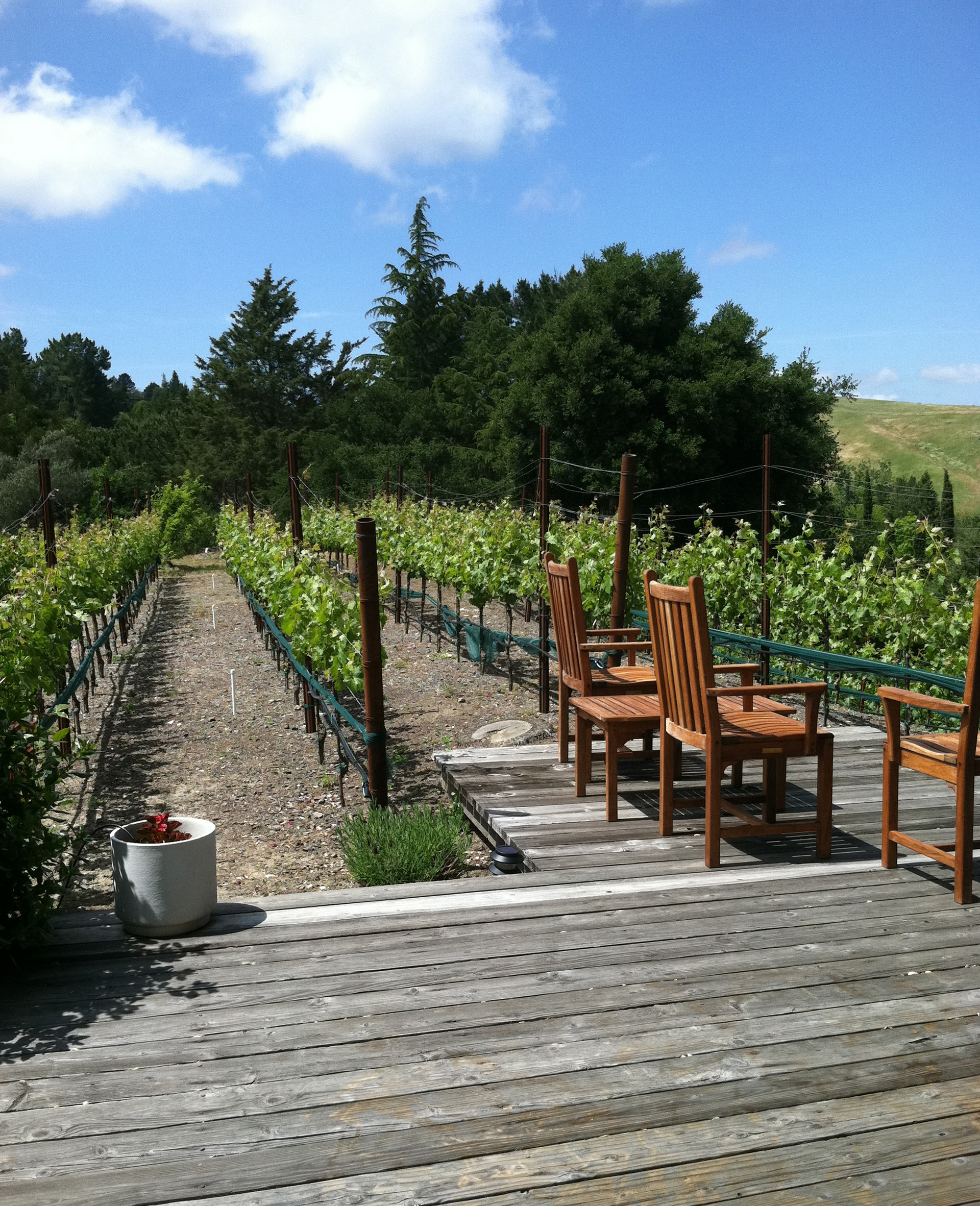 This Lamorinda home vineyard sits next to the deck, where homeowners can admire their orderly rows of cabernet and syrah vines, which grow well in the region.