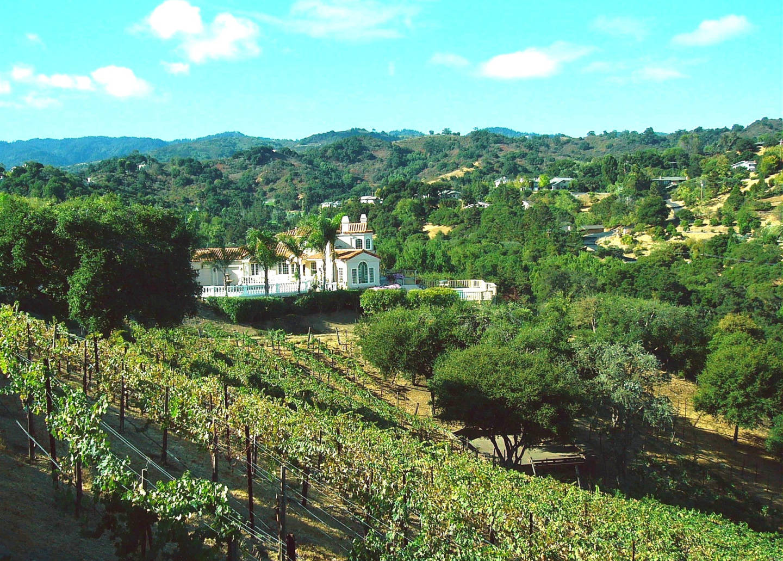 Home vineyards CK Vines
