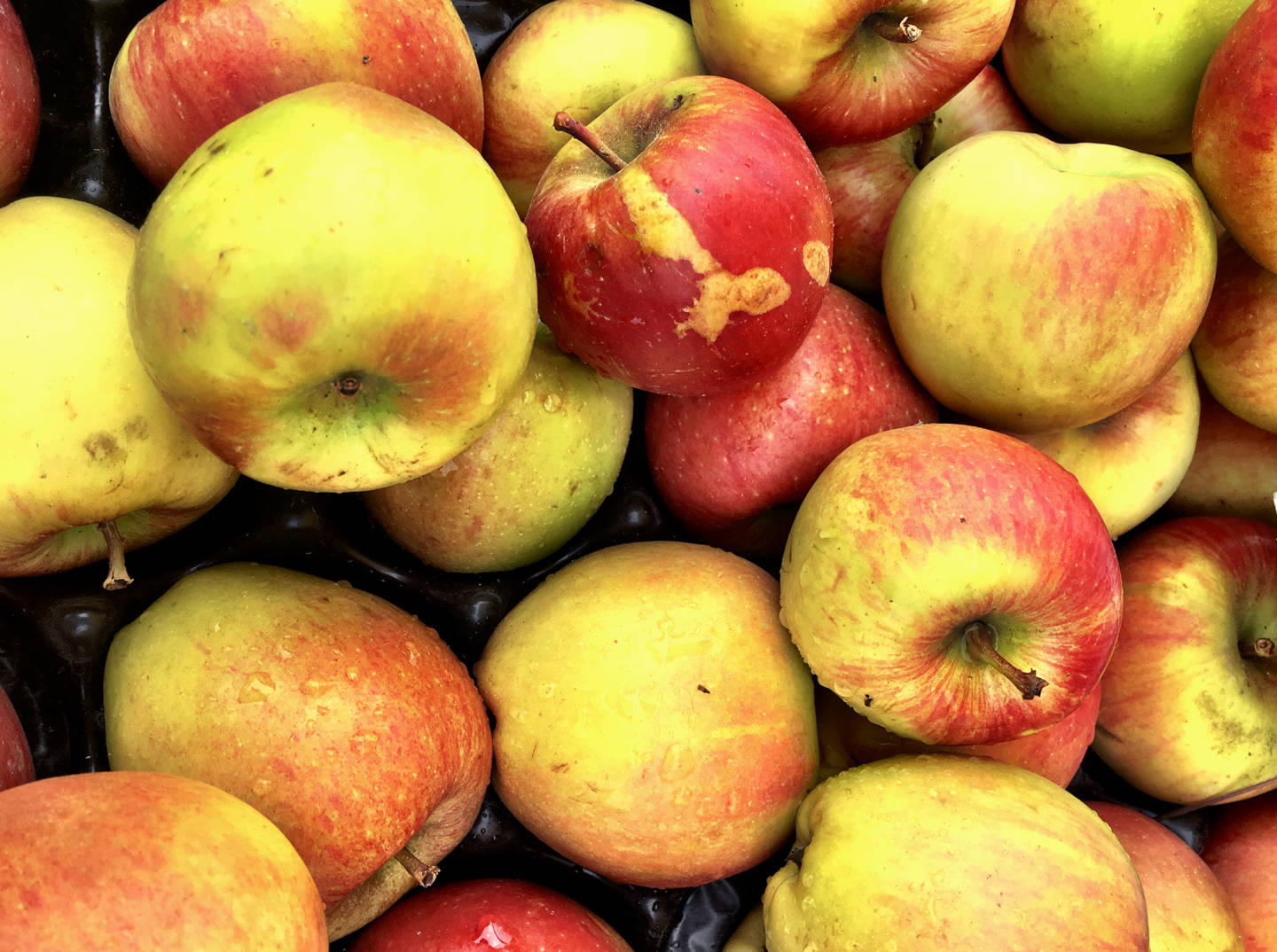 Beneath An Ugly Outside, Marred Fruit May Pack More Nutrition
