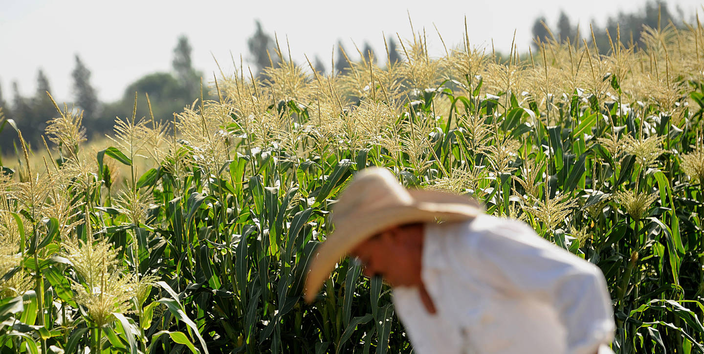 GMOs Are Safe, But Don't Always Deliver On Promises, Top Scientists Say