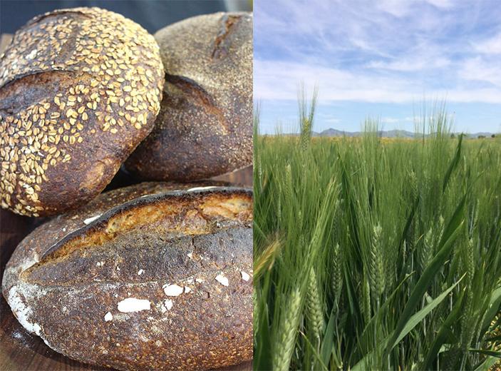 A Local Grain Economy Comes to Life in California