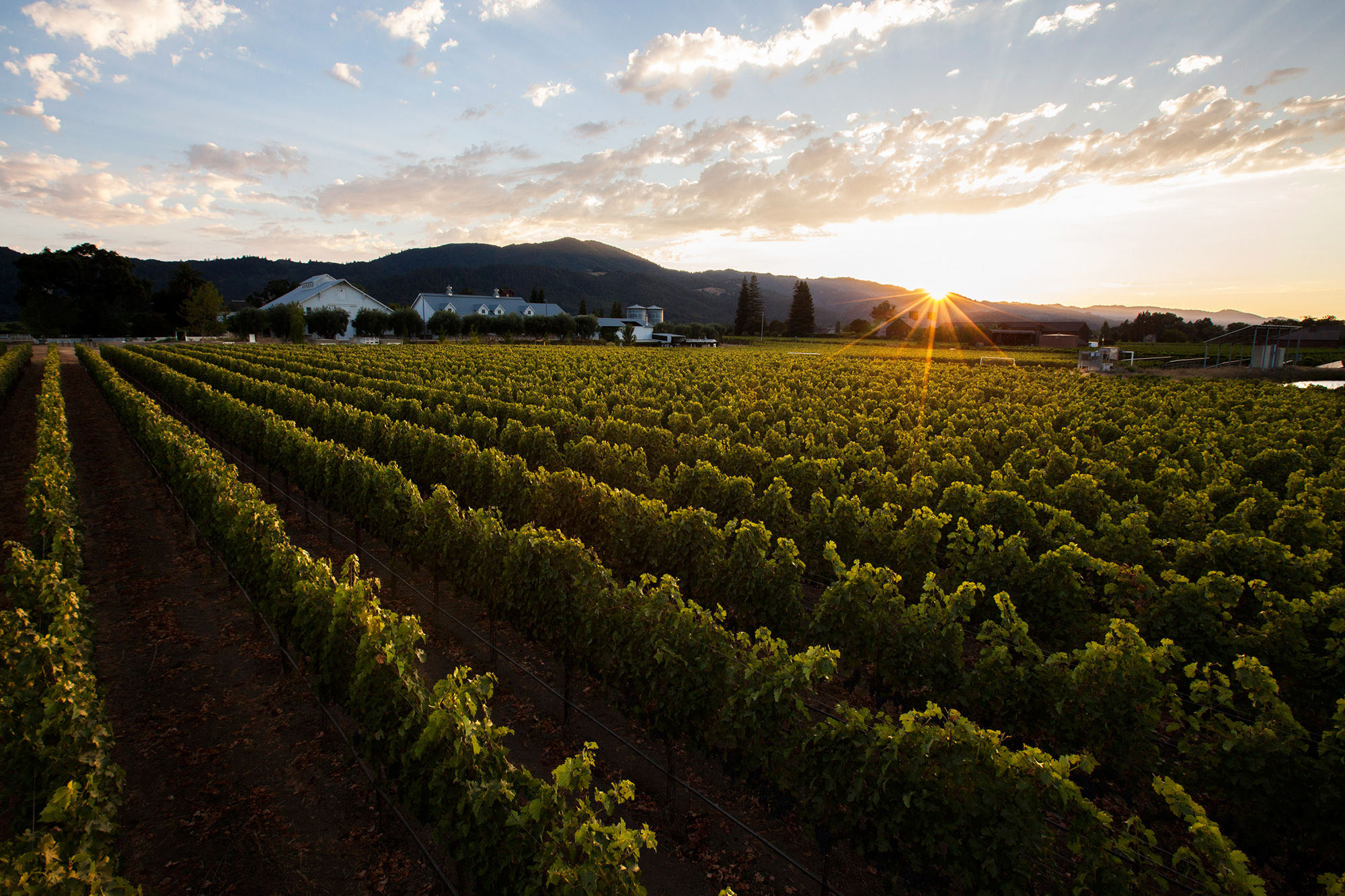 The John C. Sullenger Vineyard at Nickel & Nickel Winery, Napa Valley, Calif. Nickel & Nickel collaborated with scientists to collect wine samples and identify the bacteria and fungi in them by sequencing microbial DNA.