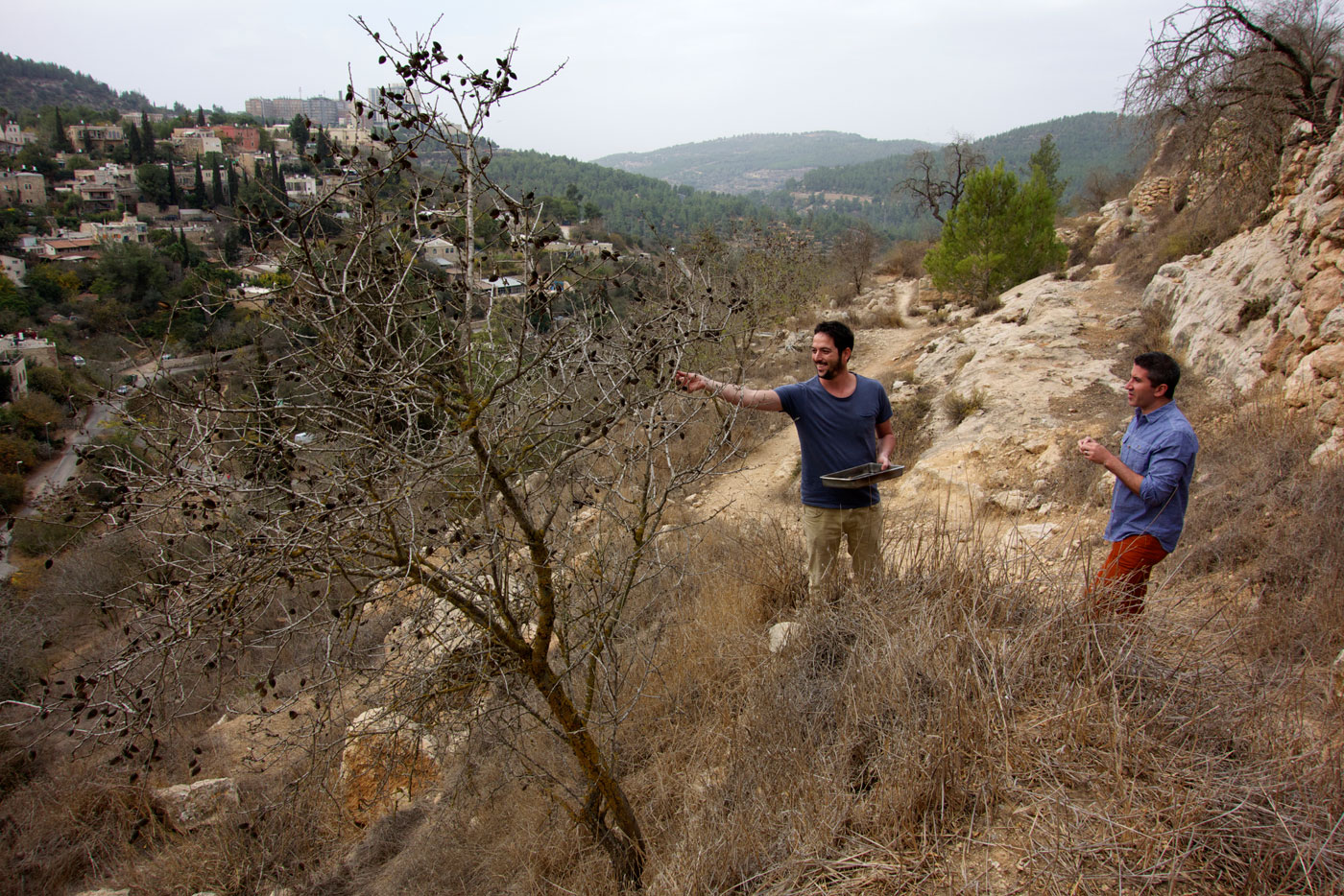 Michael Solomonov on a foraging tour in the Judean hills