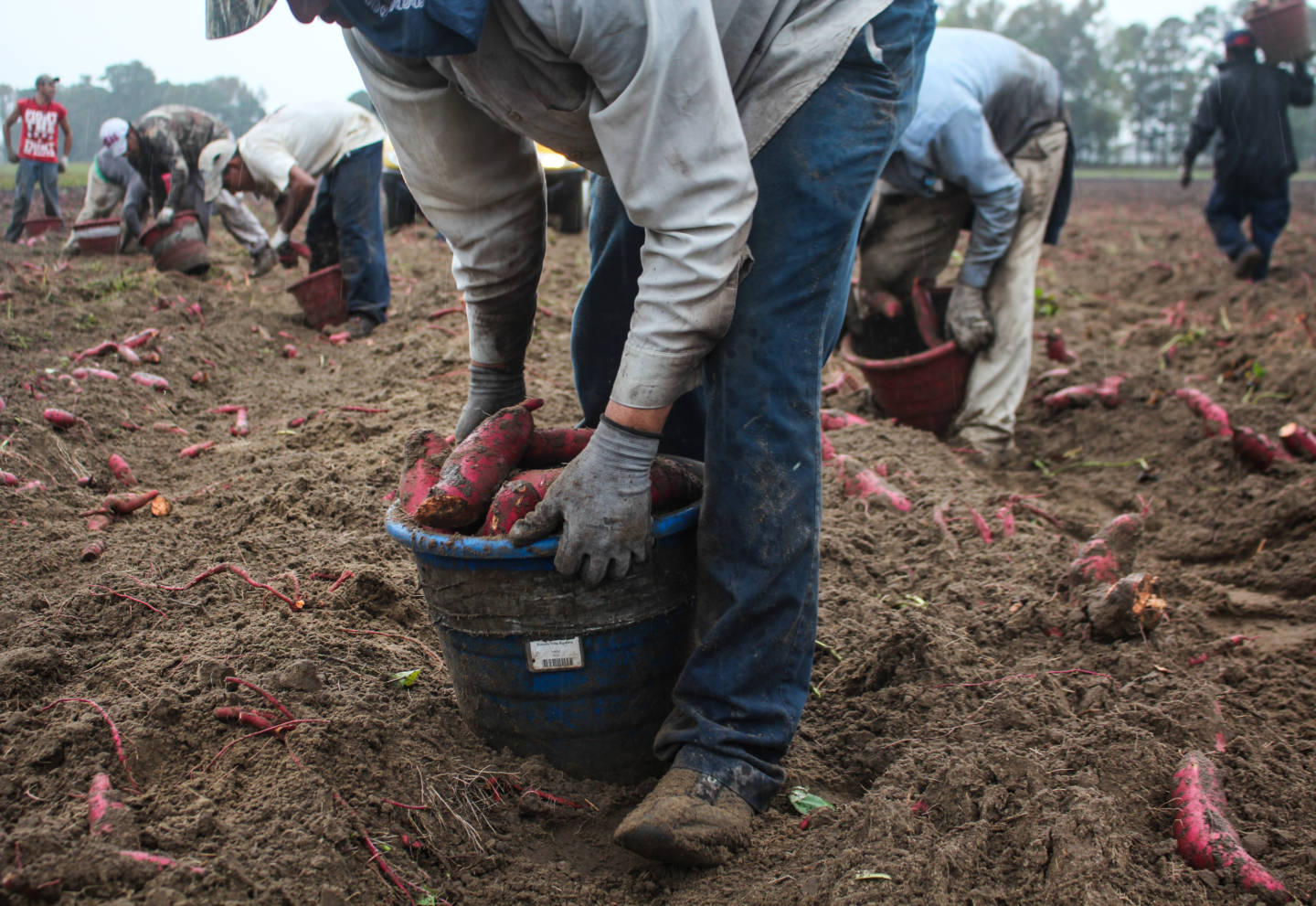 Inside The Lives Of Farmworkers: Top 5 Lessons I Learned On The Ground