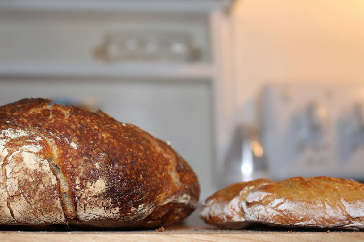 Discovering The Science Secrets Of Sourdough (You Can Help)