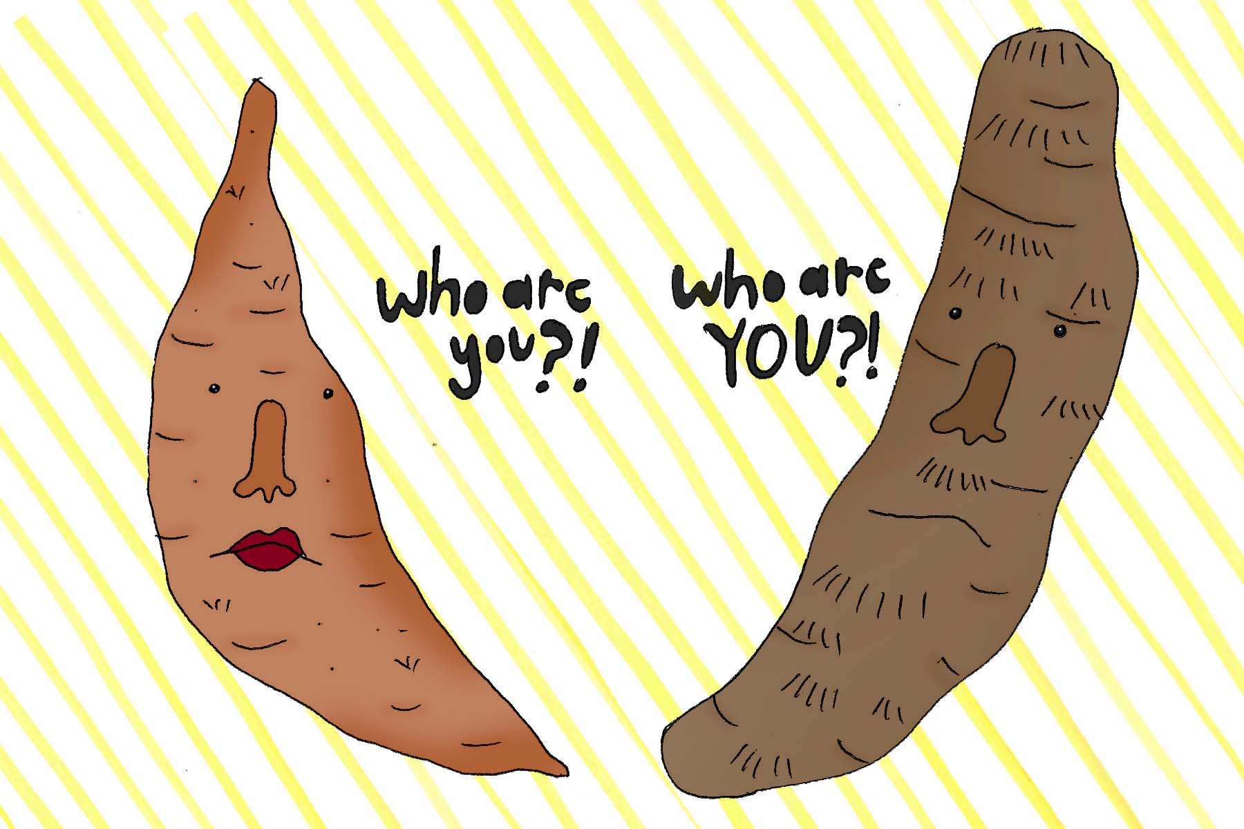 The meeting between a Sweet potato and a true yam.