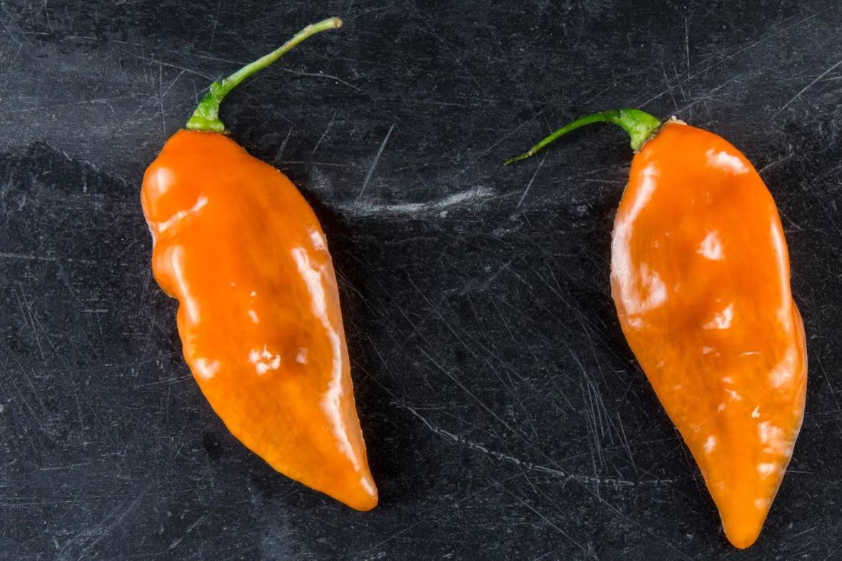 This Heatless Habanero Packs All Of The Flavor With None Of The Burn