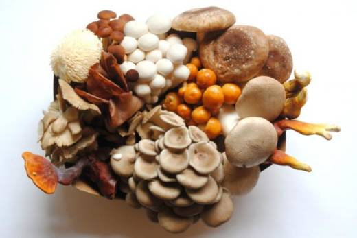 An assortment of mushrooms grown by Far West Fungi.