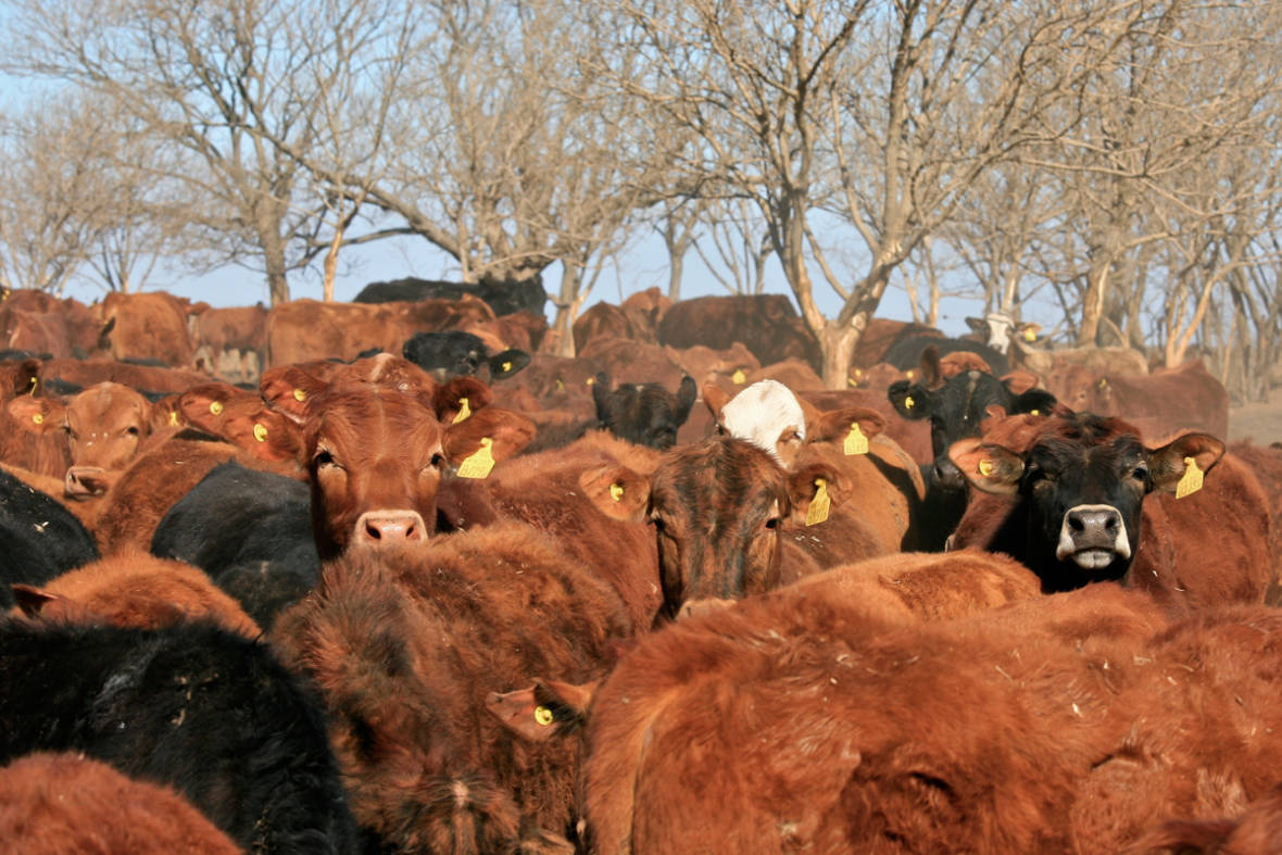 The Global Dangers of Industrial Meat