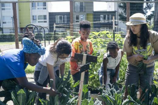 Farm manager Kana Azhari, farm assistant Yesica Martinez, student Thomas, student Raquita and educator Katina Castillo work together to pick the farm's kale.